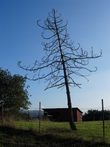 aromas tree