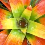 maui flora